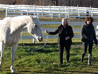 Personal Growth Through Equine Assisted Learning at Berkshire Horseworks
