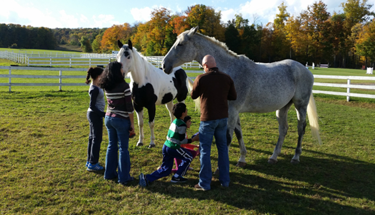 Berkshire Horseworks Programs