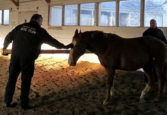 Equine assisted learning (EAL) works well for individuals, families, organizations and more.