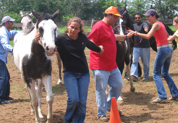 Team building with equine assisted learning